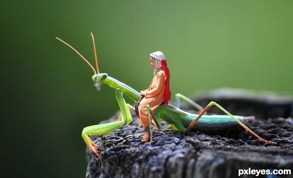 VEGA SABE asian praying mantis humming birds the Royal