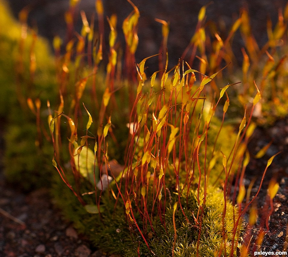 Moss in afternoon sun