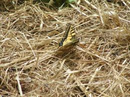 The Tiny Yellow Butterfly