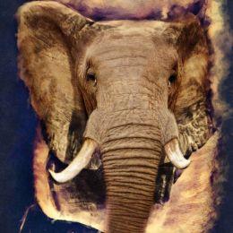 ElephantTat