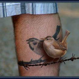 Birdonawire