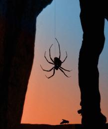 Spidersunset