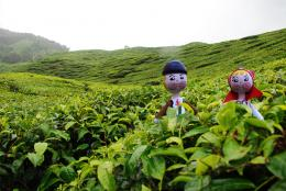couple lost at tea farm