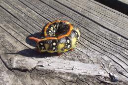 StripedCaterpillar