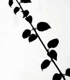 13 Leaf Silhouettes