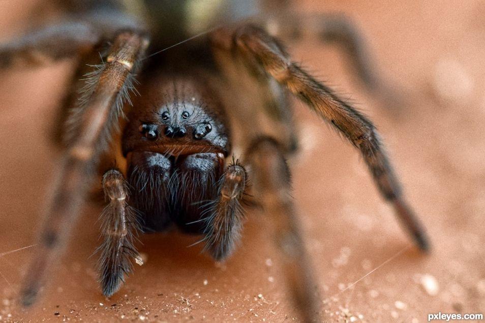 Itsybitsy Spider