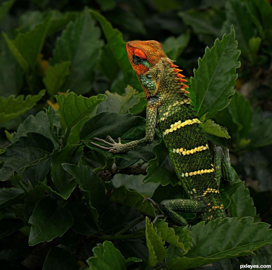 Lulu la Lizarde