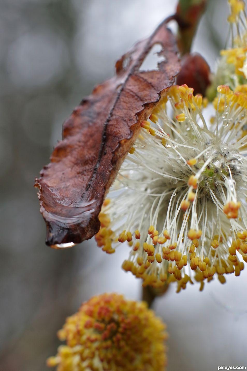 Soft Spring Rain