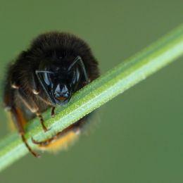 DiagonalandBumblebee