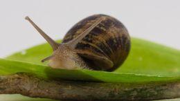 Curious snail