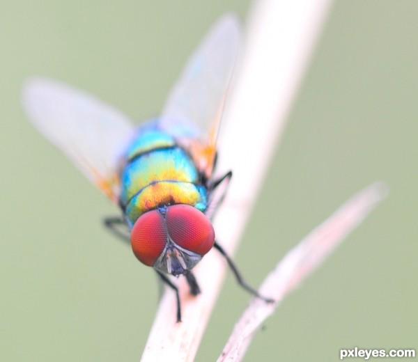vivid fly