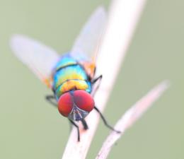 vividfly