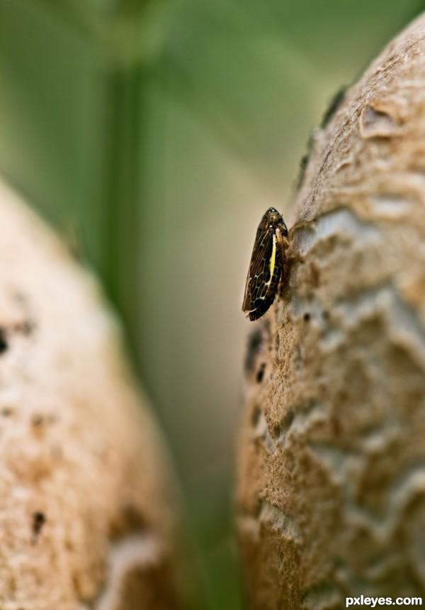 Hiding on a mushroom