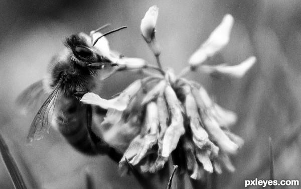 Lady Bee