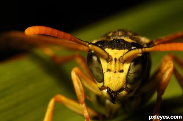 Yikes a Wasp!