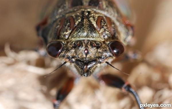 Eye-to-eye with cicada