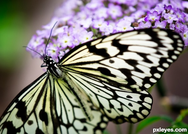 Natures Mono Butterfly