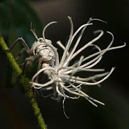 I Dunno Bug