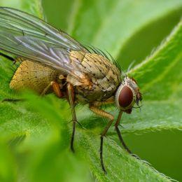 Flyfocusstacking
