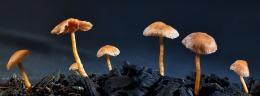small fungi