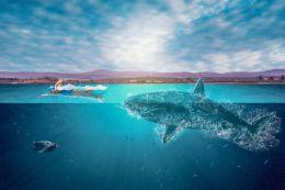 Water Shark