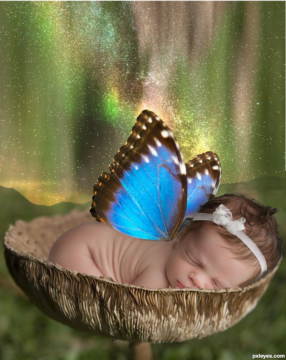 Butterfly Baby Aurora