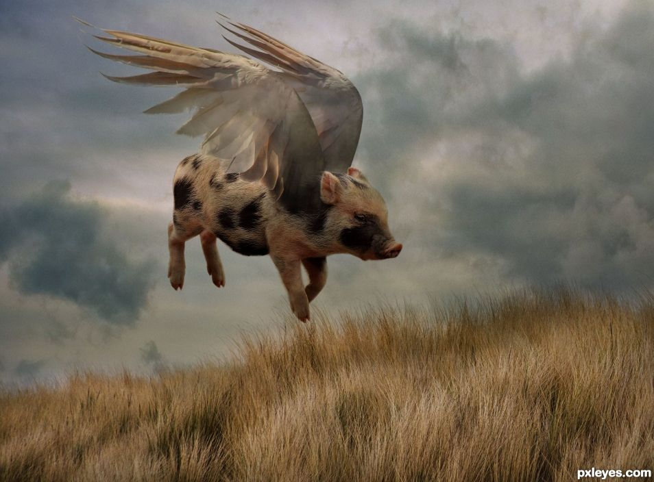 who said pigs cant fly