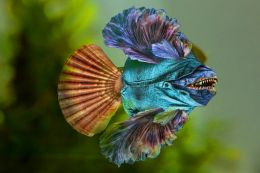 Blue Jean Fish
