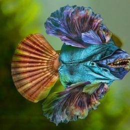 BlueJeanFish