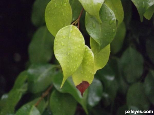 ...leaf