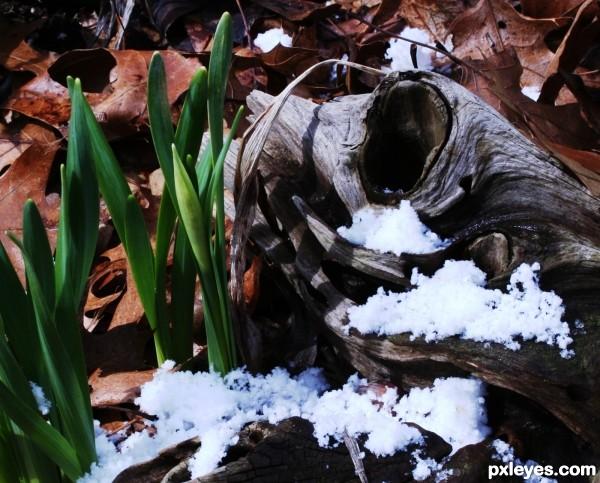 Snow, Sun, Flowers