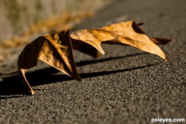 """The Leaf """"Claw"""""""