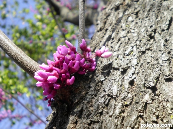 tree with blooms