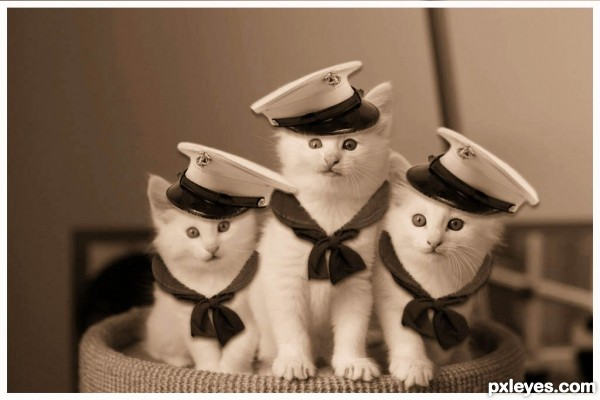 the navy kittens