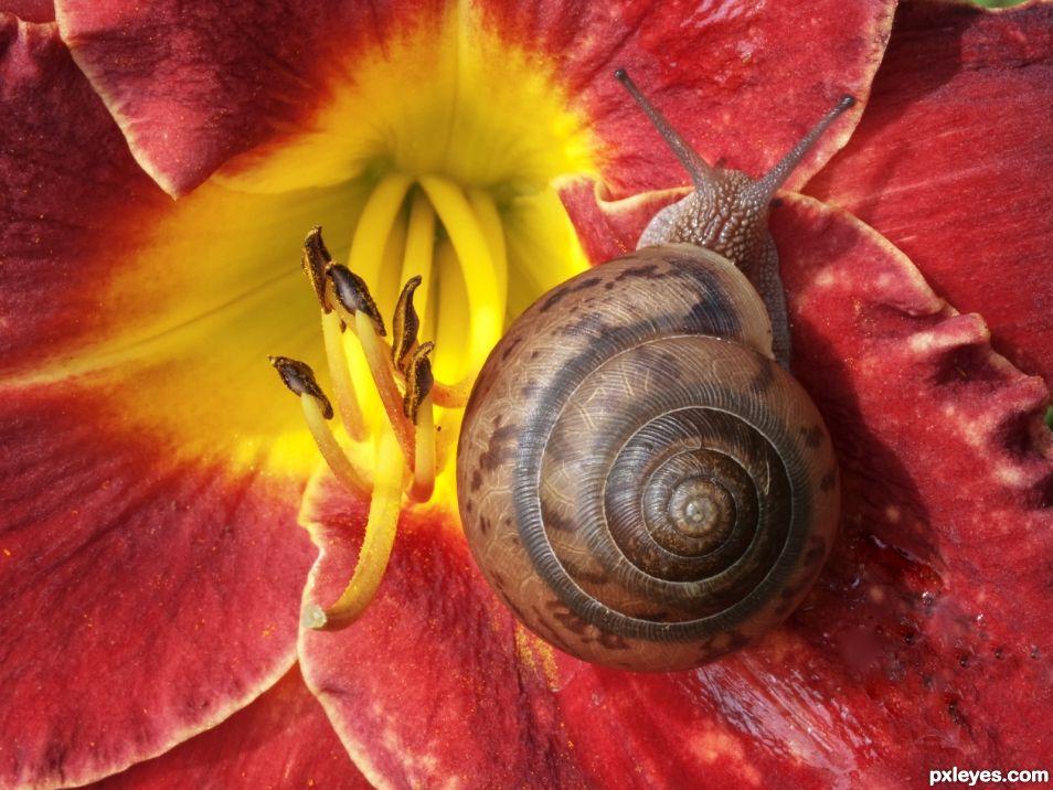 Snail on Lily