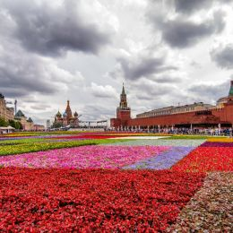 RedSquareinFlowers