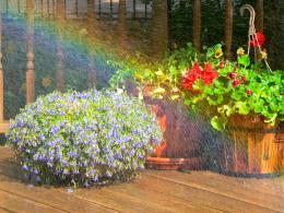 rainbowinthemist