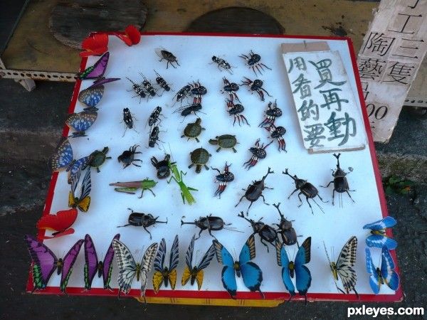 Fake insects! Dont be scared