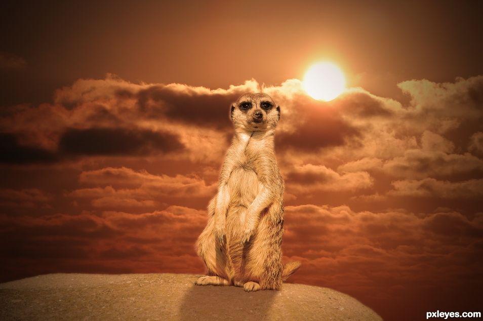 Meerkat with Undergoing Sun