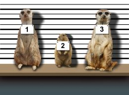 Suspects Line Up