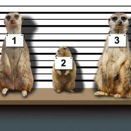 SuspectsLineUp