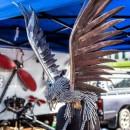 metal bird photoshop contest
