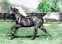 Silver Horse  Picture