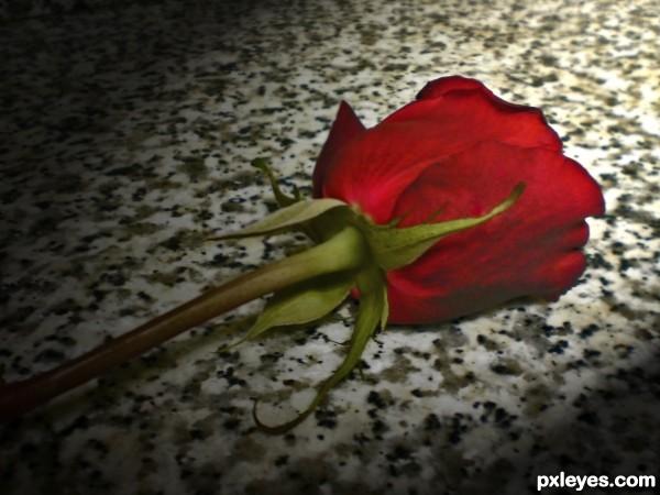 lone rose
