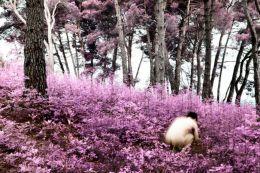 Spring in infrared