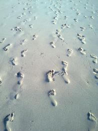 FootstepsintheSand