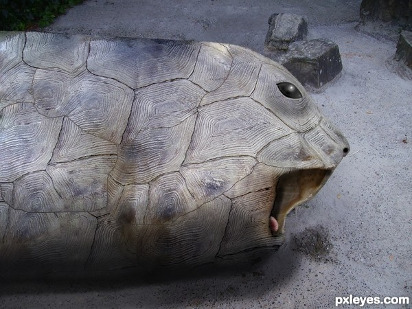 Creation of Turtle Seal: Final Result