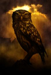 LonelyOwl