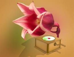 Flonograph