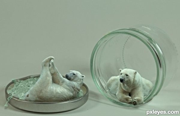 Mini Polar Bears
